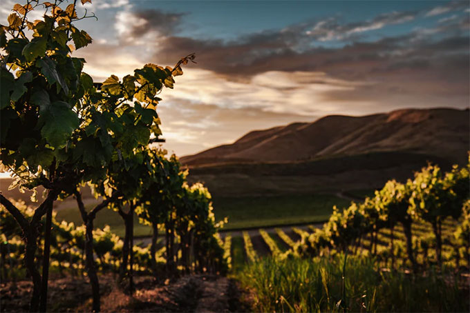 featured image 5 Reasons You Should Visit Wineries Great location - 5 Reasons You Should Visit Wineries
