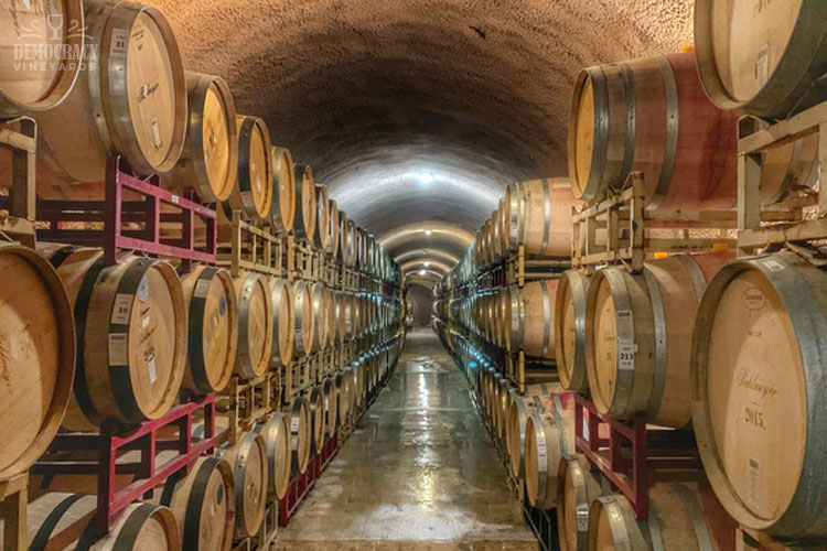 5 Reasons You Should Visit Wineries