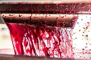 featured image 7 Important Things You Should Know About Wine Importance of colour 300x200 - featured-image---7-Important-Things-You-Should-Know-About-Wine--Importance-of-colour