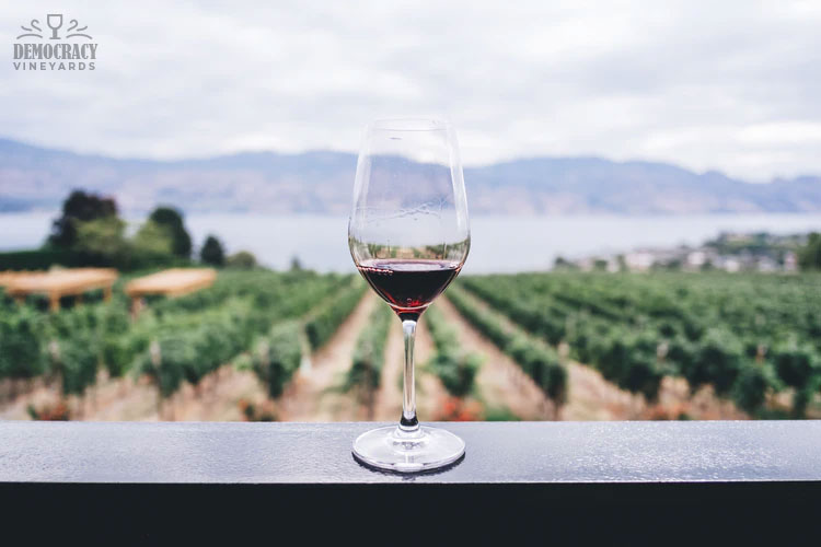 7 Important Things You Should Know About Wine